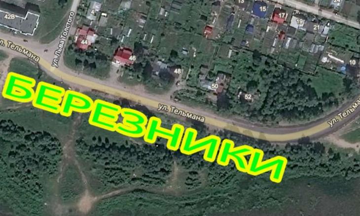 ВПермском крае посадят кедровую аллею-надпись, которая будет видна изкосмоса