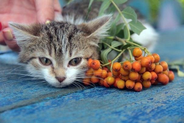 Волонтеры собрали нужную сумму для установки памятника-копилки бездомному коту